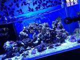 Под ключ морской, пресный(акваскейп) аквариум